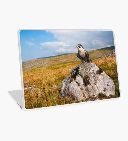 Peregrine Falcon Laptop Skin