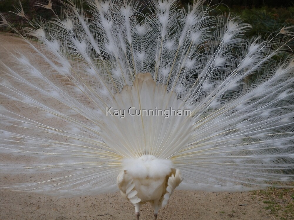 A Beautiful Rear View by Kay Cunningham