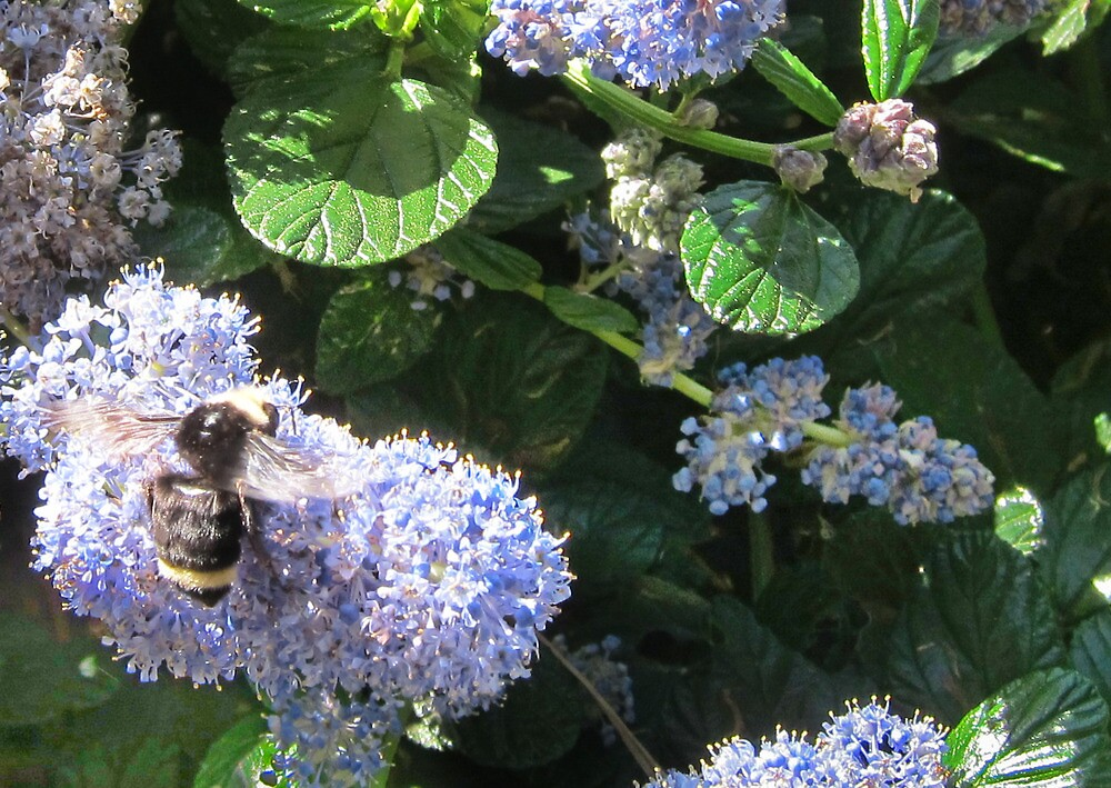 Queen Bee by David Denny