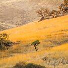 Grassy slope by Rudi Venter