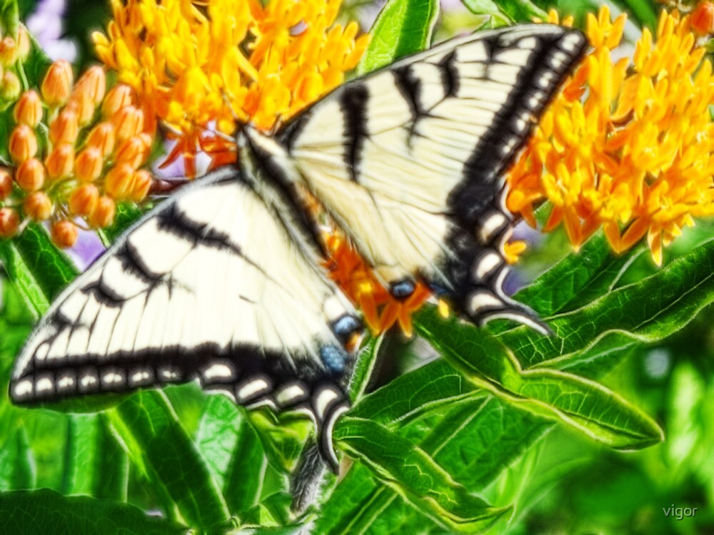 Swallow Tail in Fractalius by vigor