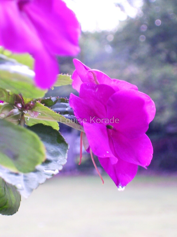 Impatiens  by Louise Korade