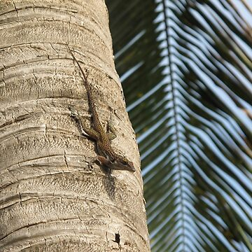 Caribbean Lizard by half4adventure