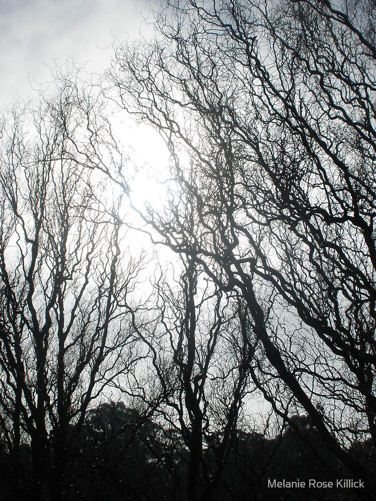 Winters outline by Melanie Rose Killick
