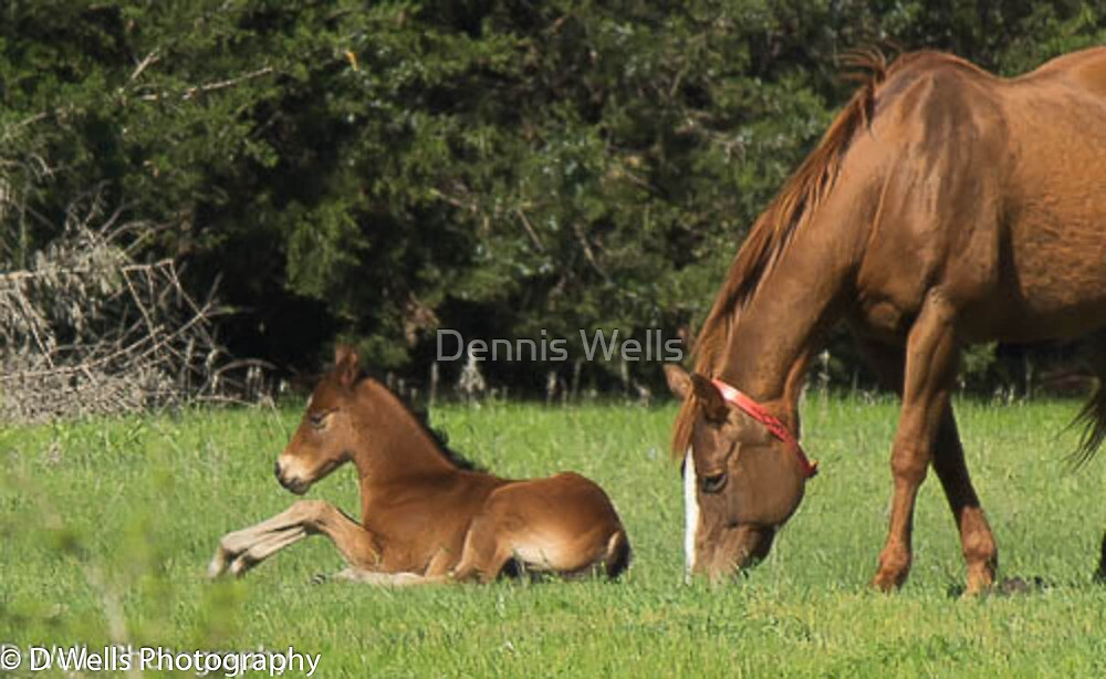 New colt and mother  by Dennis Wells