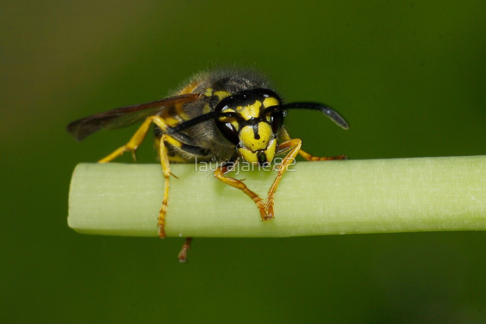 Wasp by laurajane82