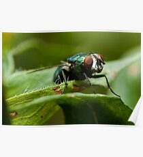 potrait of a green fly Poster
