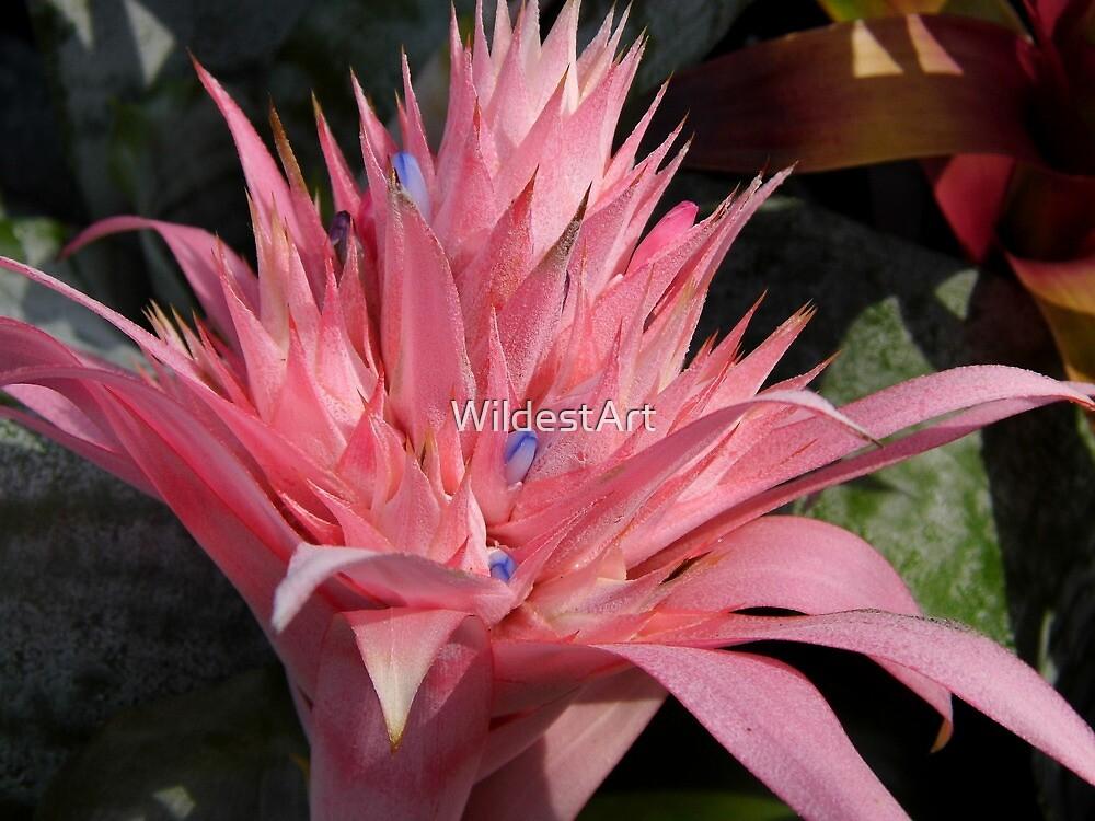 Pink Bromeliad by WildestArt