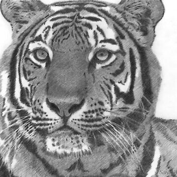 Tiger Stare by sarahwfox