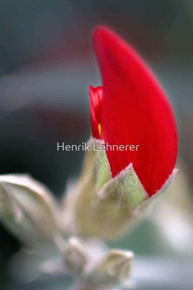 Red Flame by Henrik Lehnerer