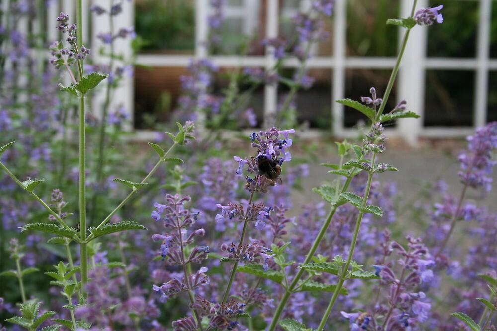 Bumblebee by floweryfotos