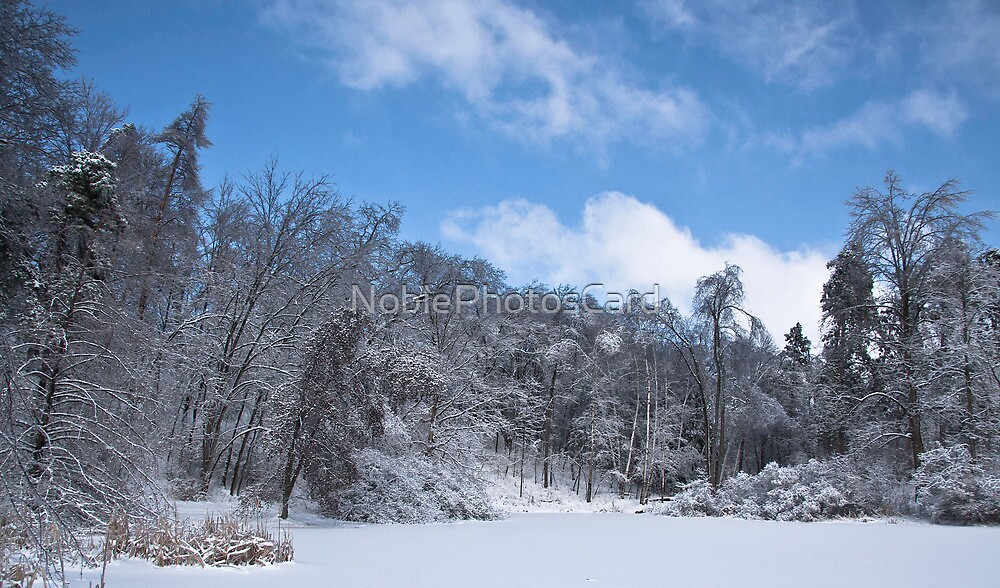 Forest after Ice Storm by NoblePhotosCard