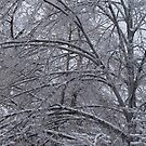 Branches of Icy Tree by NoblePhotosCard