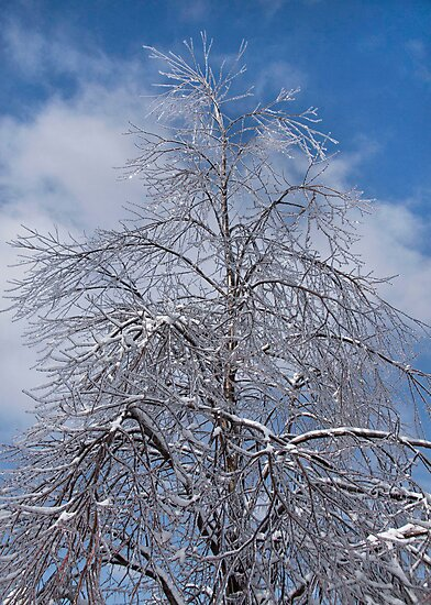 Tall Tree Encased in Ice by NoblePhotosCard