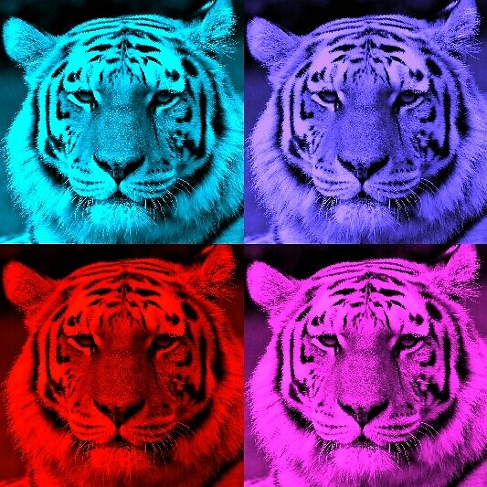 Tigers-Pop art by Echops2014