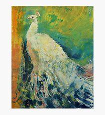 White Peacock Photographic Print