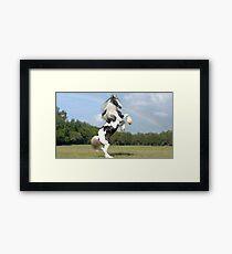 elite horse Framed Print