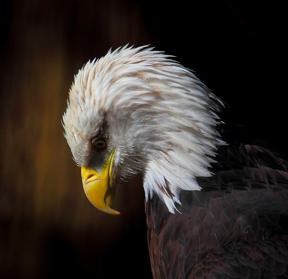 Eagle of Sadness by RandyHume