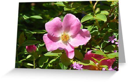 Garden Flower by 365Londontown