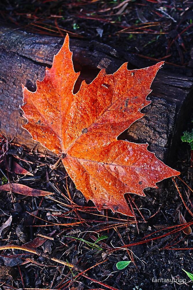Autumn Leave on a frosty morning, The Gorge, Launceston, Tasmania by fantasytripp