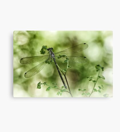 A tiny one hidden in the green by the pond Canvas Print