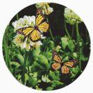 Summer Butterflies by Scott Mitchell
