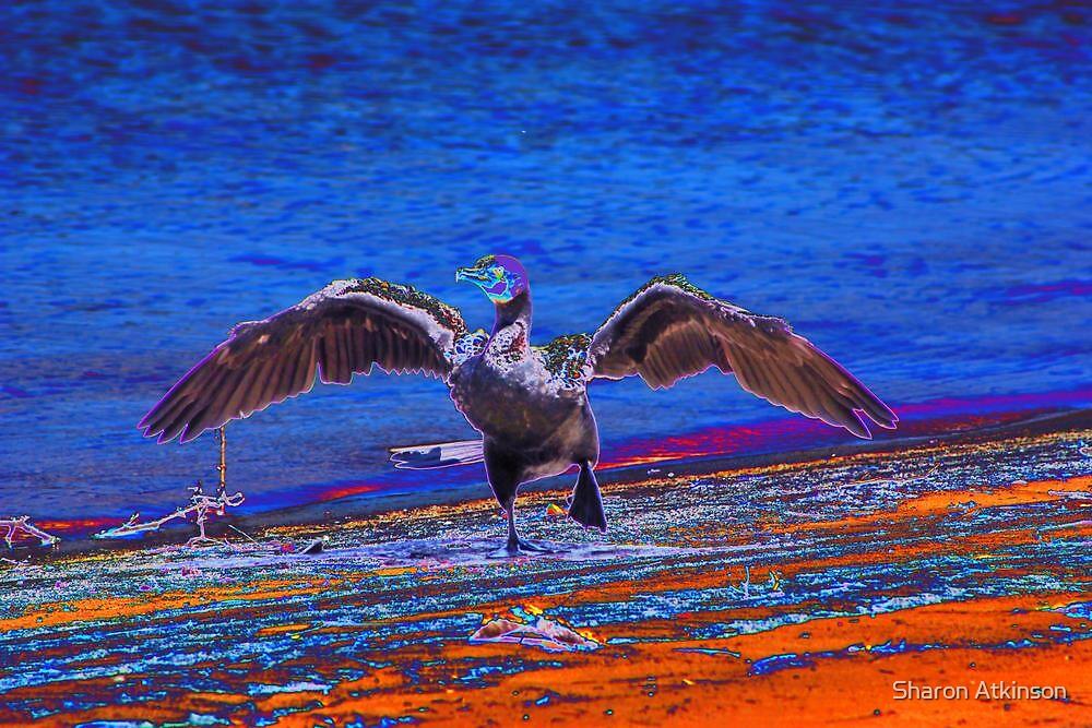 Cormorant rock by Sharon Atkinson