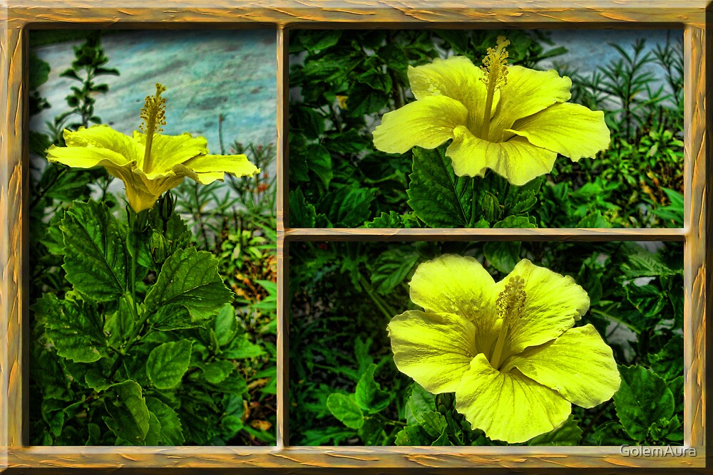 A Yellow Hibiscus in Three by GolemAura