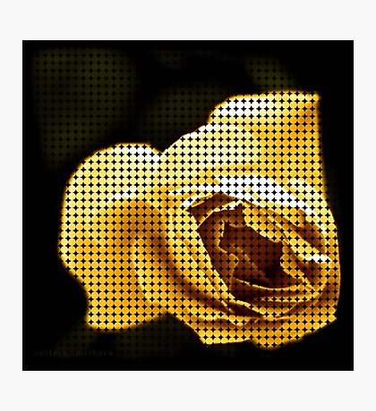 Spotted Rose Photographic Print