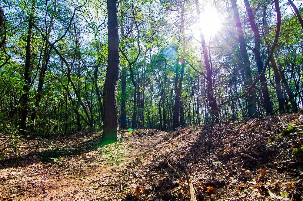 Forest  by Stixez