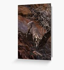 Bighorn Sheep Nibbling Brush in Zion Park Greeting Card