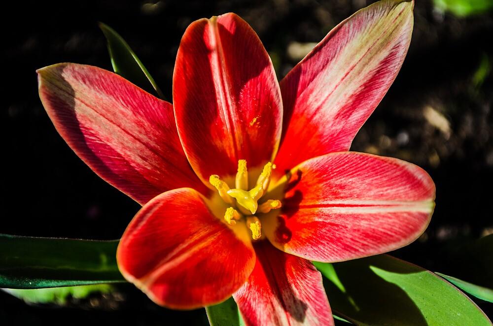 Flower close up by Stixez