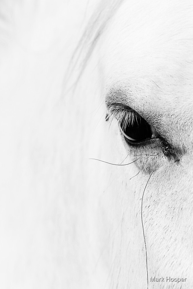 Wild Horse by Mark Hooper