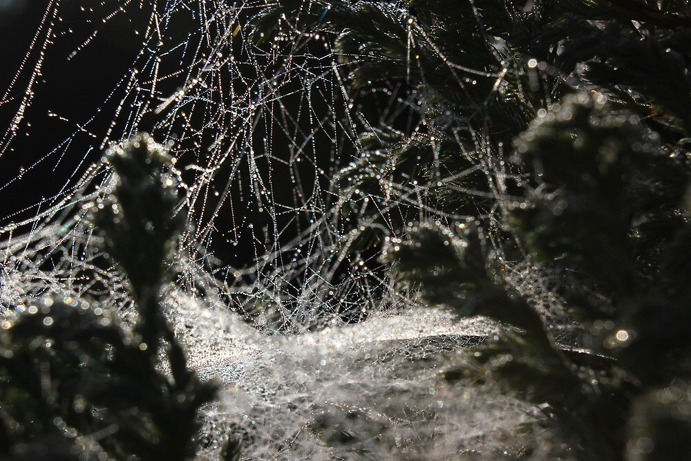 Dew drops on cobwebs by turniptowers