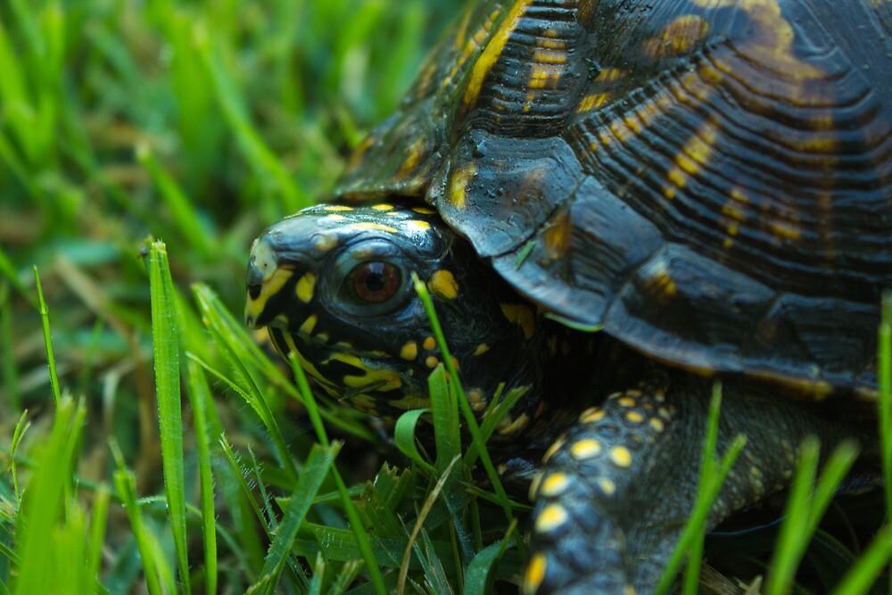 Da Backyard turtle by DonnietheTurtle