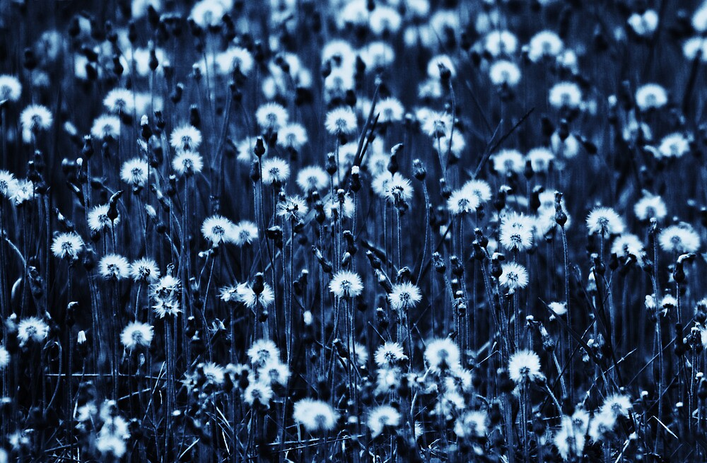 Field of Daisies by Nazareth