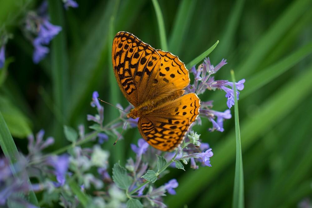 Great Spangled Fritillary by Lynn Gedeon