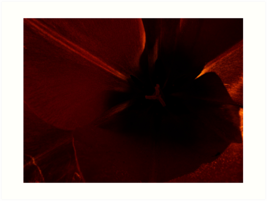 An Idea of a Tulip by Lesley Collier