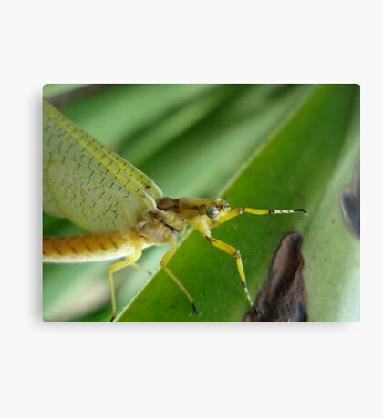 I Spy with my Little Eye Canvas Print