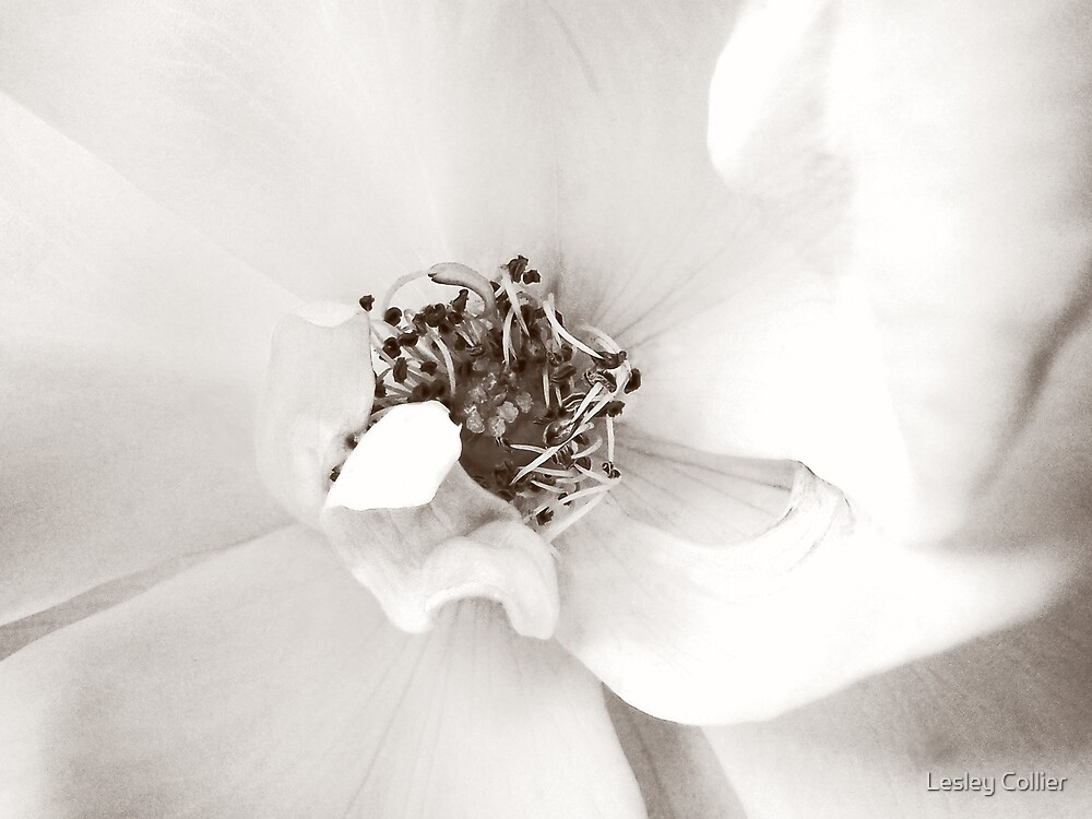 Pink Flower - High Key, Vanilla by Lesley Collier