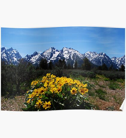 Wildflowers and the Grand Tetons Poster