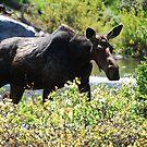 Lady Moose by Tori Snow
