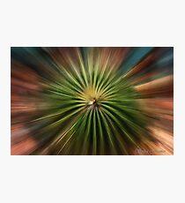 Exploding Cactus Photographic Print