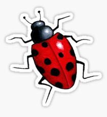 Big Ladybug, Ladybird, Bright Red Insect, Wildlife Art Sticker