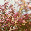 Rainbow Skies by ALICIABOCK