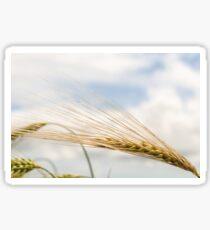 Barley Sticker