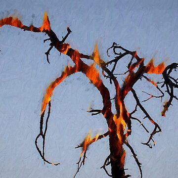 Burning Tree by davegordon