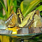 Colorful Butterflies by Jackie Popp
