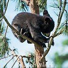 Tree Climbing by Luann wilslef