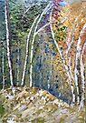 Birch trees by Elizabeth Kendall